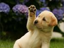 Hãy kể về một kỉ niệm đáng nhớ đối với một con vật nuôi mà em yêu thích