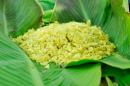 Soạn bài Một thứ quà của lúa non: Cốm (ngắn gọn) - Thạch Lam