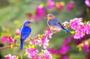 Soạn bài Mùa xuân của tôi - Ngắn gọn nhất
