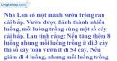 Bài 34 trang 24 SGK Toán 9 tập 2
