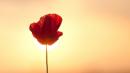 Trong bài thơ Giục giã, nhà thơ Xuân Diệu viết:  Thà một phút huy hoàng rồi chợt tối,  Còn hơn buồn le lói suốt trăm năm.  Qua bài thơ Vội vàng và truyện ngắn Tỏa nhị Kiều anh (chị) hãy chứng minh và bình luận về quan niệm sống nói trên của Xuân Diệu.