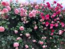 Dàn ý về bài thơ Vội Vàng của Xuân Diệu - Ngữ Văn 11