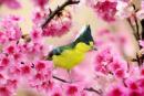 Phân tích khổ đầu bài Mùa xuân nho nhỏ của Thanh Hải.