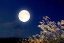 Soạn bài Ngắm trăng (Vọng nguyệt) - Ngắn gọn nhất