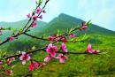 """""""Mùa xuân là Tết trồng cây, Làm cho đất nước càng ngày càng xuân"""" Em hiểu 2 câu thơ trên của Bác như thế nào?"""