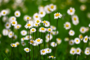 Phân tích bài thơ Vội vàng của Xuân Diệu để thấy sự tươi trẻ trong tình yêu
