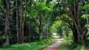 Viết đoạn văn chứng minh bảo vệ rừng là bảo vệ cuộc sống của chúng ta