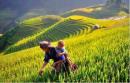 Viết đoạn văn cảm nhận về vẻ đẹp người phụ nữ Việt Nam qua hình ảnh người mẹ Tà Ôi