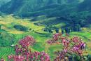 Tổng hợp 5 cách mở bài cho tác phẩm Đất nước - Nguyễn Khoa Điềm