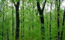 Tổng hợp 5 cách mở bài cho tác phẩm Rừng xà nu