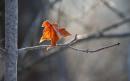 Viết đoạn văn cảm nhận về đoạn văn miêu tả chiếc lá trên tường trong tác phẩm Chiếc lá cuối cùng