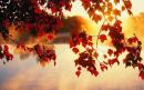 Tổng hợp 5 cách kết bài cho tác phẩm Đây mùa thu tới