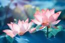 Mọi phẩm chất của đức hạnh là ở trong hành động - Ngữ Văn 12