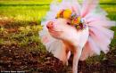 Viết đoạn văn khái quát nội dung và nghệ thuật chính của truyện Lợn cưới áo mới