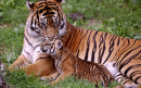 Tổng hợp 5 cách kết bài cho tác phẩm Con hổ có nghĩa