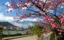 Tổng hợp các cách mở bài cho tác phẩm Mùa xuân của tôi