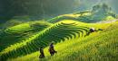 Bình giảng bức tranh tứ bình trong bài Việt Bắc - Tố Hữu