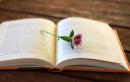 Luyện tập viết đoạn văn thuyết minh