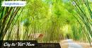 Từ văn bản Cây tre Việt Nam, viết đoạn văn nêu cảm nhận về hình ảnh cây tre