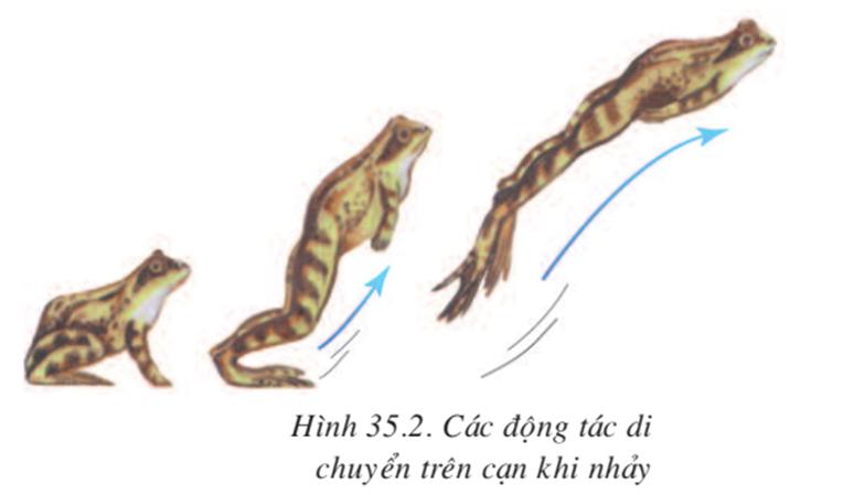 Lý thuyết Sinh học 7 Bài 35: Ếch đồng (hay, chi tiết)
