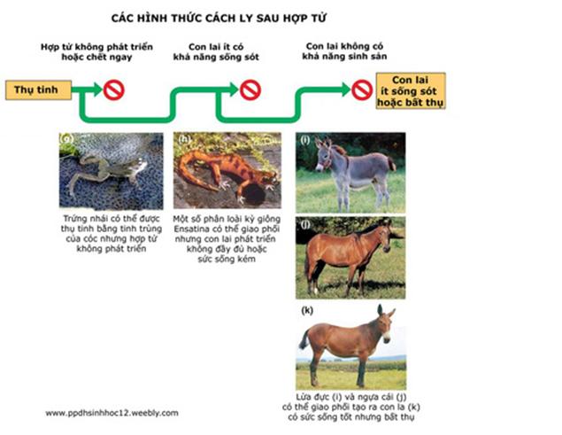Lý thuyết Sinh học 12 Bài 28: Loài | Lý thuyết Sinh học 12 đầy đủ, chi tiết nhất