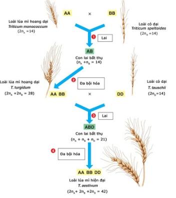 Lý thuyết Sinh học 12 Bài 30: Quá trình hình thành loài (tiếp theo) | Lý thuyết Sinh 12 ngắn gọn