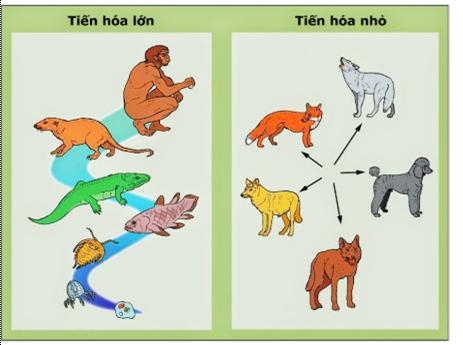 Lý thuyết Sinh học 12 Bài 31: Tiến hóa lớn   Lý thuyết Sinh 12 ngắn gọn